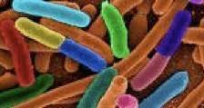 Escherichia Coli al microscopio elettronico